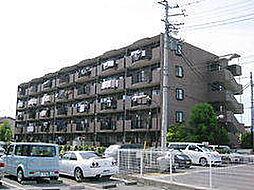 埼玉県草加市新善町の賃貸マンションの外観