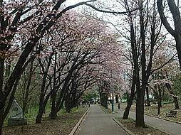 緑ヶ丘公園 散...