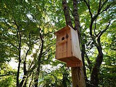 物件周辺は緑に溢れ、小鳥も来たくなるような環境です。子供も手作りのお家を作りたくなりますね