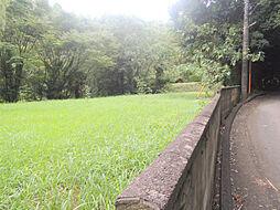 緑豊富な土地で...