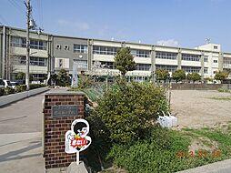 小学校野崎西小...