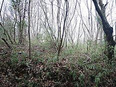 緑に囲まれた自然あふれる環境です
