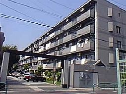 カリフール今川1号棟[2階]の外観