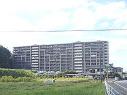 コスモ茂原