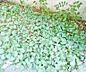 その他,1DK,面積20.21m2,賃料2.4万円,京福電気鉄道北野線 北野白梅町駅 徒歩20分,JR山陰本線 円町駅 3.3km,京都府京都市北区衣笠氷室町