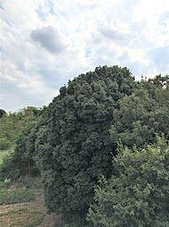 南側眺望 30.8.10 14時半頃撮影 天候:晴れ
