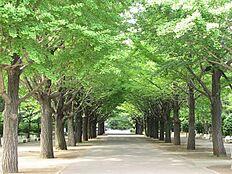 練馬区民の憩いの場「光が丘公園」もすぐに行ける好立地です