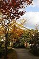 秋には紅葉がき...